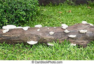 Group of mushrooms on a tree