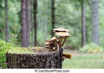 Group of mushrooms on a tree stump
