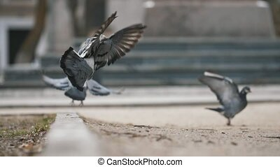 Group of nice doves going in a square and taking off...