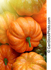 Group of orange and green pumpkins