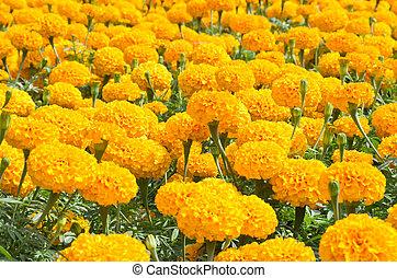 group of orange flower