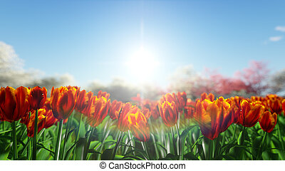 Group of orange, red tulips against the sky.