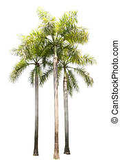 group of palm tree plant isolated on white