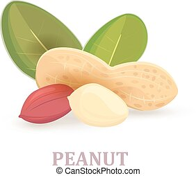 group of peanuts with leaves on white background for your design