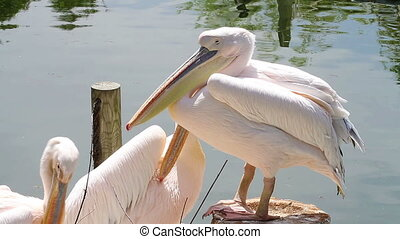 Group of pelicans resting in the su