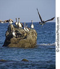 group of pelicans resting on the rocks