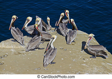 group of pelicans sitting on the rocks