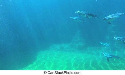 Group of penguins floating underwater