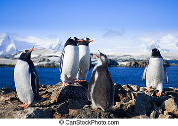 Group of penguins having fun on a background of mountains