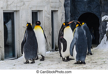 Group of Penguins in the Japan Zoo