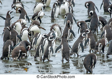 Group of penguins on shore