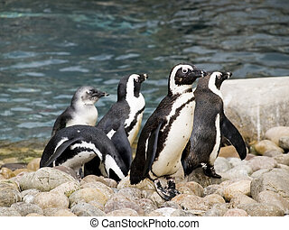 Group of penguins playing against the shore line