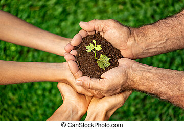 Group of people holding young plant in hands