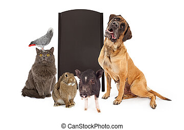 Group of Pets Around Blank Chalk Board - A group of common...