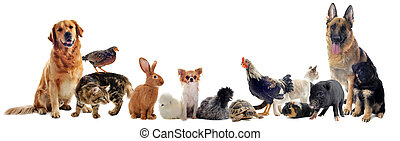 group of pets - group of pet in front of a white background