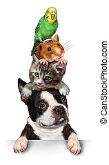 Group Of Pets - Group of pets concept as a dog cat hamster...