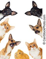 Group of pets peeking