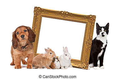 group of pets standing around a golden picture frame in...