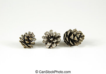 Group of pine tree cones
