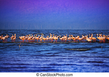 Group of pink flamingoes on the lake in water