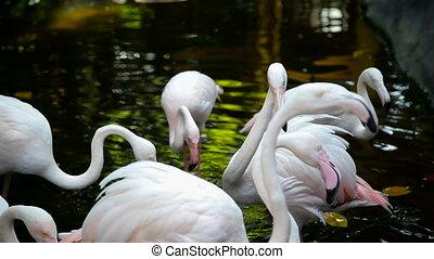 Group of pink flamingos at the zoo