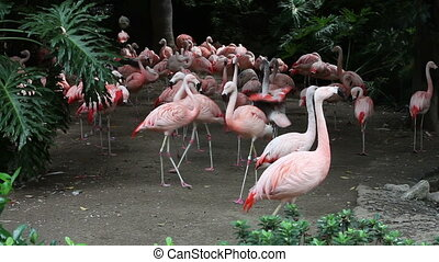 Group of pink flamingos at the zoo.