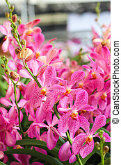 Group of Pink orchid flowers with green leaf