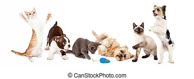 Group of Playful Cats and Dogs