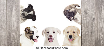 group of puppies looking