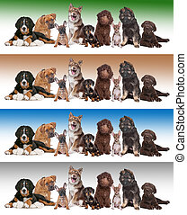 group of puppies on diverse gradient backgrounds - Large...