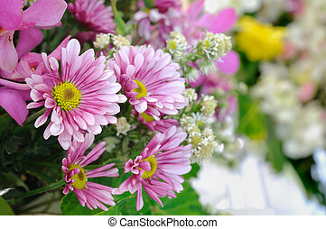 Group of purple daisies flowers.
