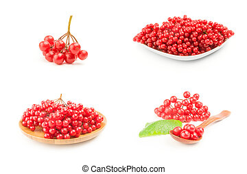 Group of red berries of a guelder-rose