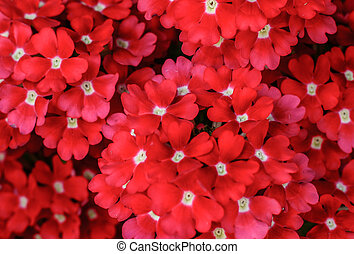 Group of red flowers background