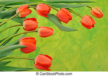 Group of red tulips over colored background