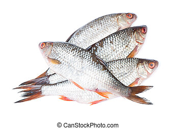 Group of roaches river fishes