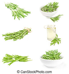 Group of rosemary over a white background