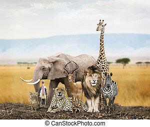 Group of Safari Animal Friends