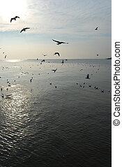 group of sea bird on water