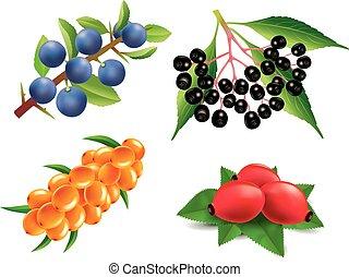 Group of sea buckthorn, rose hip, black elderberry, ...