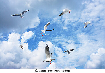 Group of sea gulls against a blue sky with clouds