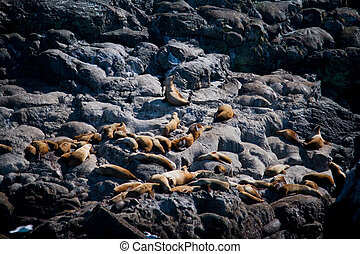 Group of Sea Lions on Rock