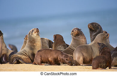Group of sea lions on the beach - Group of sea lions basking...