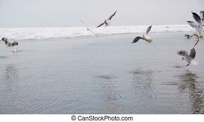 Group of Seagulls Diving and Fighting for Food in Winter Ice-Covered Sea. Slow Motion