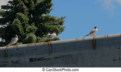 Group of seagulls standing on concrete pier. Nature concept
