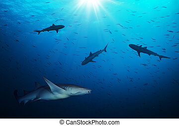Group of sharks hunting smalls fish in beautiful deep blue water with sunrays