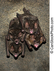 Group Of Small Bats
