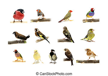 Group of small birds on white