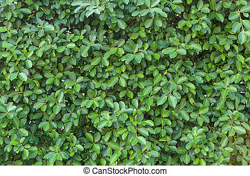 small green leaf background