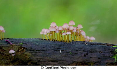 Group of small mushrooms on the trunk in the forest
