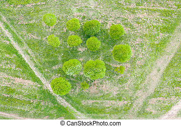 Group of small willow trees with a round crown in a city park aerial top view.